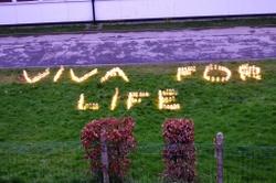 Viva for Light