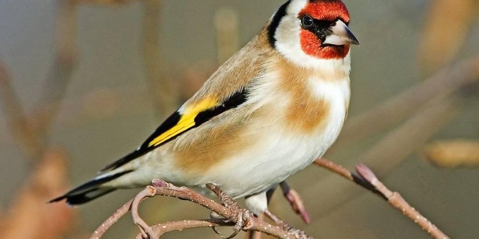 baladeguidee oiseaux